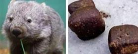 袋熊便便是方的?搞笑诺贝尔奖的惊人发现!