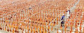 中国靠什么养活14亿人?
