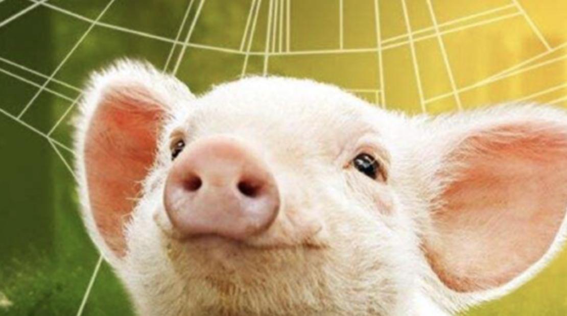 养猪到底有多难?