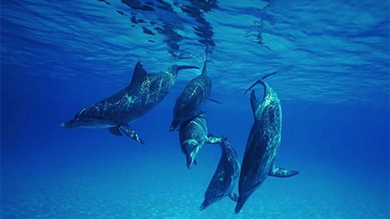 壁纸 动物 海洋动物 桌面 800_450