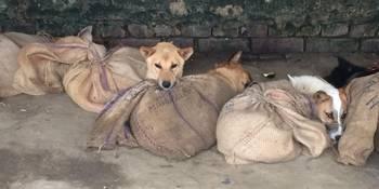 印度一交易市场进行地下狗贸易,贩子用空头像微手套美女信短发图片