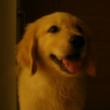 快乐巡回犬