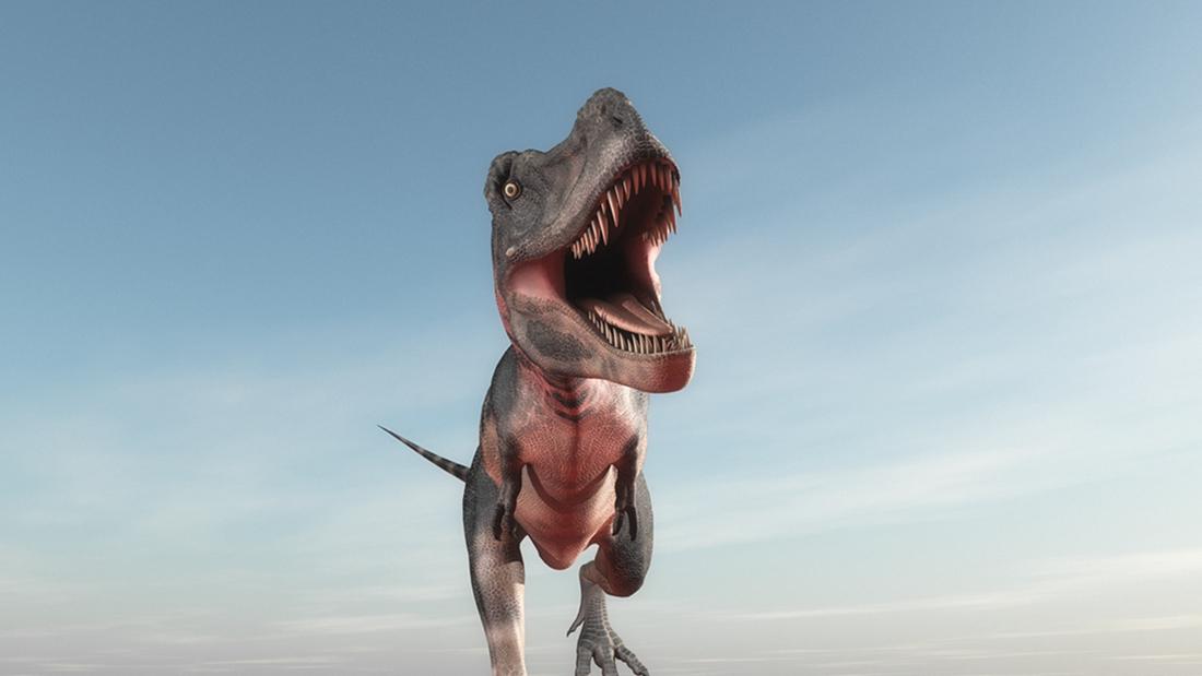 我们是怎样在琥珀里发现恐龙尾巴的?