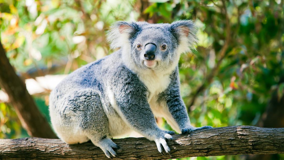 这些关于动物的冷知识,据说只有1%的人知道的头图