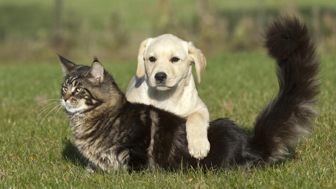猫VS狗:谁是人类最好的朋友?