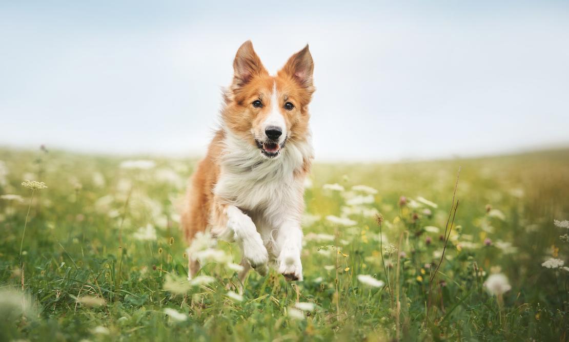 不可思议,狗狗竟然能闻出癌症!动物的超能力你信吗?
