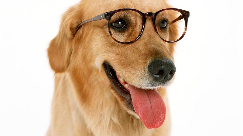 近视眼镜,要不要经常戴?