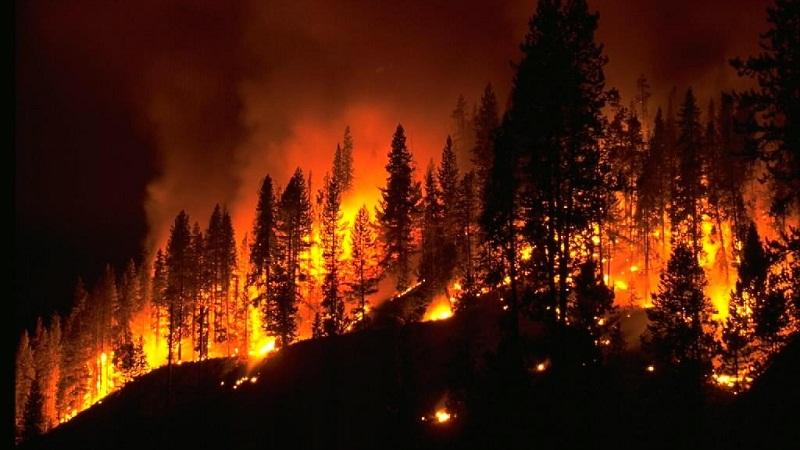 不是所有的森林火災都需要撲滅?