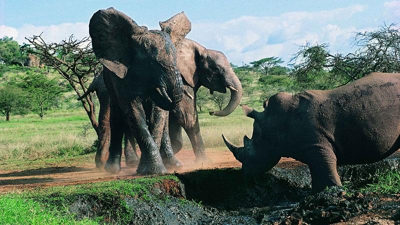 """大象""""強奸""""并殺死犀牛是怎幺回事?"""