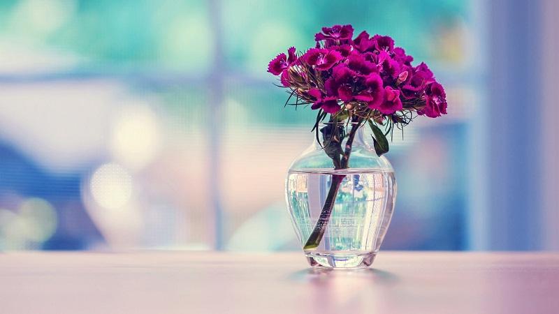 在花瓣中加阿司匹林可以让花朵开得更久吗?
