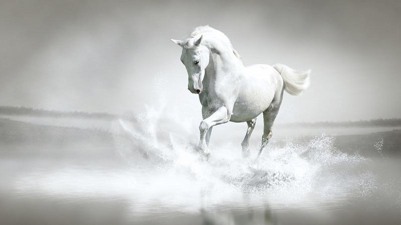 """""""偷渡者""""唐三藏胯下的白龙马是什幺马 ?"""