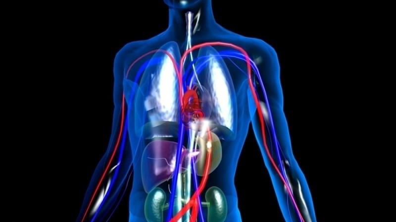 如何預防血管疾病?