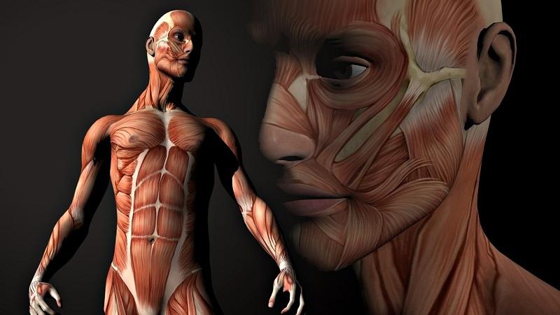 你知道人体最强肌肉是哪块吗?的头图