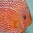 养鱼的鱼缸水应该放到什么位置合适?需要全部