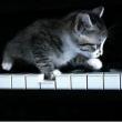 外贸建站seo_我是弹钢琴的今年23岁想要弹奏跨九度的乐章请问有什么办法让手指变长的办法?